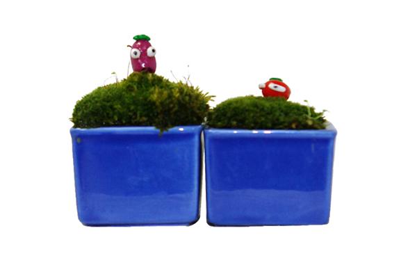 ナストマ盆栽:青い箱庭